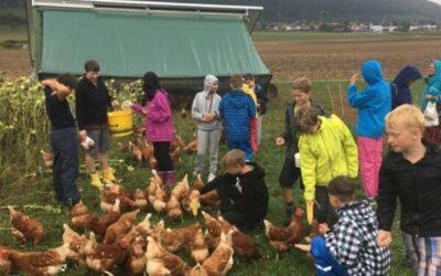 Ausflug zum Hühnerstall
