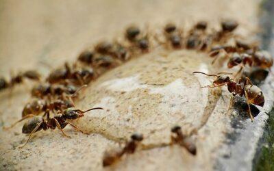 Projektnachmittag zum Thema Ameisen
